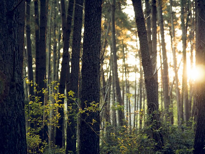 Nachhaltigkeit - regenerative Rohstoffe